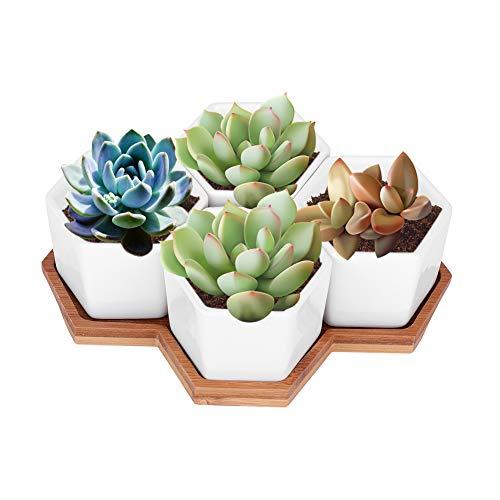 Maceta, Maceta para Plantas de Interior, Maceta con Bandeja, para mesas de salón