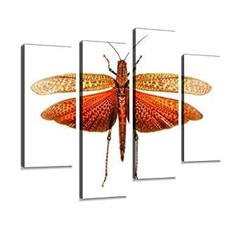 worlds largest grasshopper
