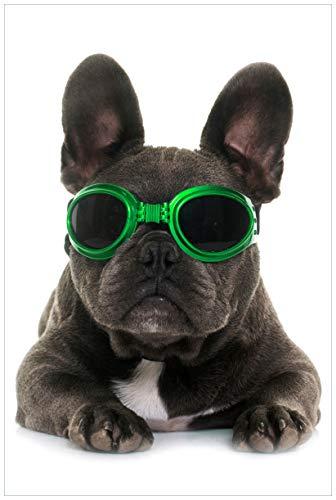 Wallario Acrylglasbild Cooler Hund mit Sonnenbrille in grün - Französische Bulldogge - 60 x 90 cm in Premium-Qualität: Brillante Farben, freischwebende Optik