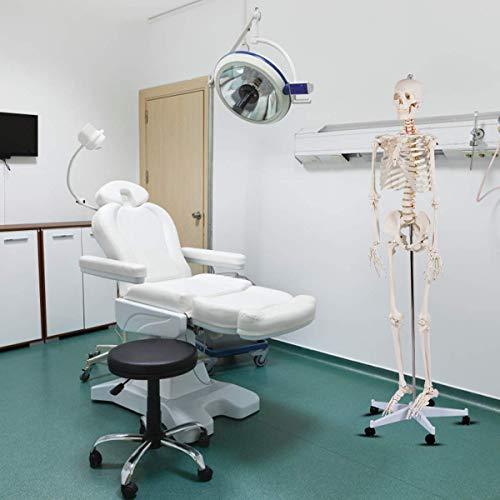 Laqemhu Modelo médico de Esqueleto de anatomía anatómica Humana de tamaño Natural de 70,8'+ Modelo de Esqueleto de Soporte es una Herramienta Ideal para la enseñanza y el Estudio