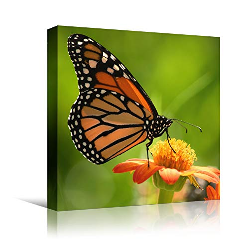 bestdeal depot Butterfly XIX Expressive Farmhouse/Country Home Office Insects Lake Multicolor Photography Wall Art Prints for Living Room,Bedroom Ready to Hang - 12x12 inches