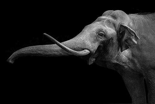 Kit de pintura de diamante de taladro redondo completo 5D Diy, elefante de nariz larga, dormitorio de amantes de la historieta sin marco 40x50 cm