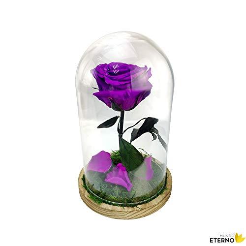 Cúpula Bella y Bestia Rosa Eterna Preservada Lila Oscuro