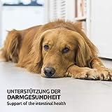 AniForte Wurm-Formel 250 g- Naturprodukt für Hunde - 2