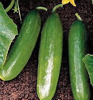 diva hybrid cucumber