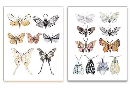 Watercolor Moths Art Prints - Vintage Nature Wall Art - Kitchen Wall Decor - Rustic Farmhouse Artwork - Butterfly Posters - Mariposas Decorativas - SET of 2-8x10 - UNFRAMED