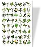 BUZZ Poster, Motiv: Gartenkräuter, 56 Kräuterbilder
