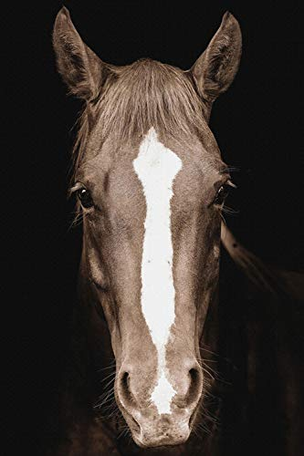 Zwart-wit wild paard hoofd poster en prints Nordic wall art Scandinavische canvas schilderij woonkamer muurschildering
