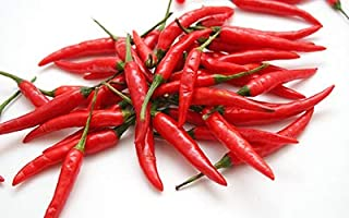 Cayenne Pepper Seeds, Long Red Thin Cayenne Peppers, 125+ Premium Heirloom Seeds - 99.7% Purity - ON SALE! - (Isla's Garden Seeds) - Non GMO Organic - Survival Seeds - Highest Quality