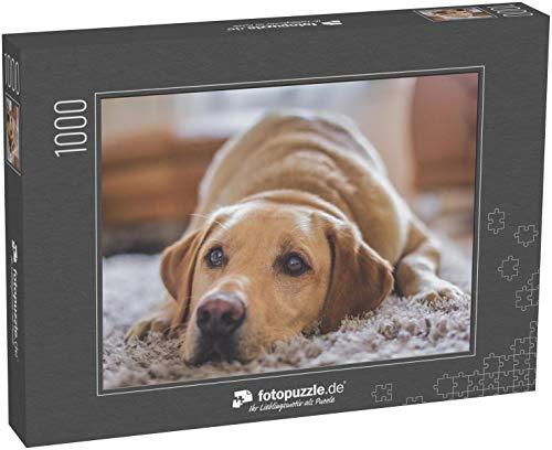 Puzzle 1000 Teile Goldener Labrador Hund - Klassische Puzzle, 1000/200/2000 Teile, in edler Motiv-Schachtel, Fotopuzzle-Kollektion 'Tiere'
