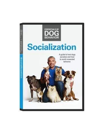 Cesar Millan Socialization DVD