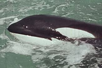 Marine Science: Whales and Whaling