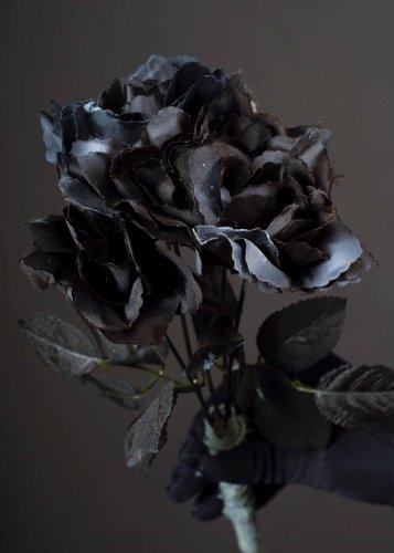 Halloween Party Roses noires gothique