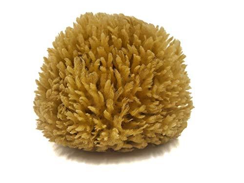 KERASAM Naturschwamm aus dem Mittelmeer, ca. 11-12 cm groß, ungebleicht, großporig, hypoallergisch, Badeschwamm Körpereinigung, plastikfrei verpackt, umweltfreundlich, hohe Qualität