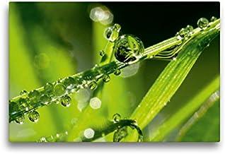 Calvendo Mi pequeño Mundo de Gotas de Agua Verdes, 45x30 cm