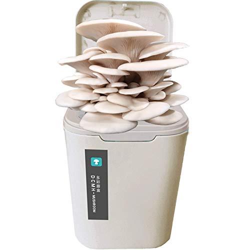DSHUJC Kit de Cultivo de Hongos para Interiores, Kit de Cultivo de Hongos Shiitake, Hongo orgánico de ostras, esporas, tapón de micelio, engendro, Cosecha y Consumo de