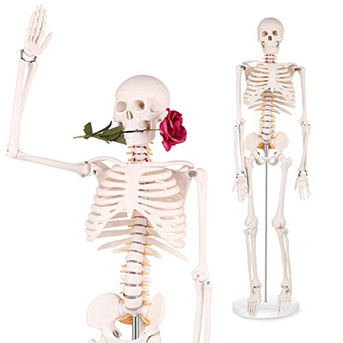 Mini Human Skeleton Model - 34 inch high Anatomical Human Skeleton Model Details of Human Bones with...