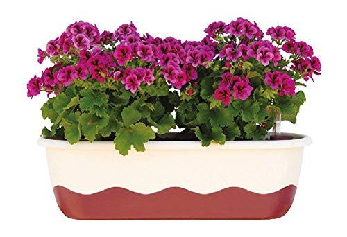 Blumenkasten Bewässerungskasten 'Mareta' 60 u. 80cm mit Selbstbewässerung, Farbe:Hell-Elfenbein + Weinrot, Größe/Durchmesser:60 cm