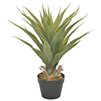 🍉Add some greenery to your interior with this lifelike artificial yucca 🌺 The plant has leaves with perfect details, giving it a full, realistic look, and it will never wither 💝 The yucca is 90 cm high and will be a great choice for your home or offi...