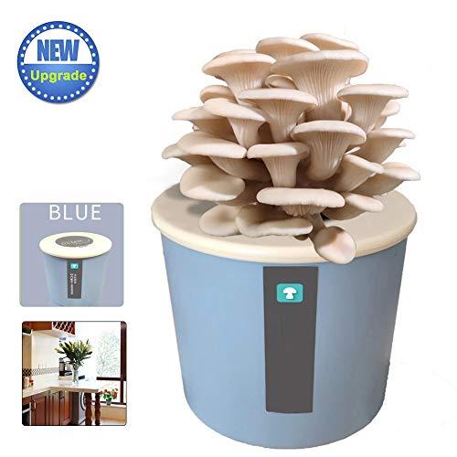M-TOP Kit Champignon Bio, Mycelium de Champignon Pleurote Prêt à Cultiver, Mycélium Spores Spawn Séchées Graines pour EnfantsWhite Oyster Mushroom-Blue