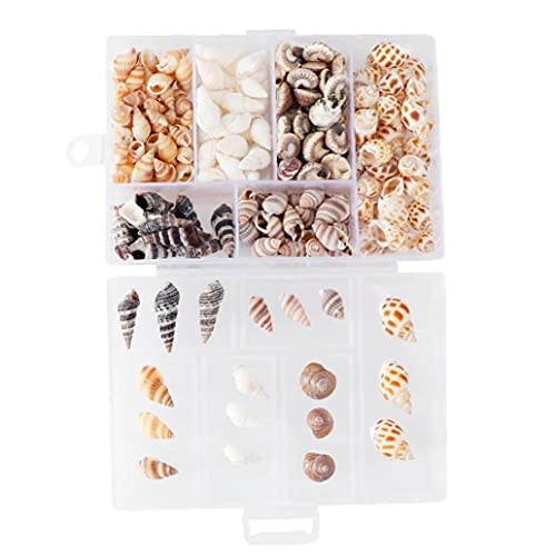1box Conch Conch Shells Mini Conch Tornillo De Maíz Decoración para Hogar DIY Aquarium Paisaje Conchells Crafts para Decoración De Fiesta