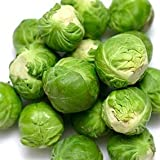 Catskill Brussel Sprouts Seeds, 300+ Premium Heirloom Seeds, Delicious Flavor!, (Isla's Garden Seeds), Non GMO, 85-90% Germination Rates, Highest Quality Seeds