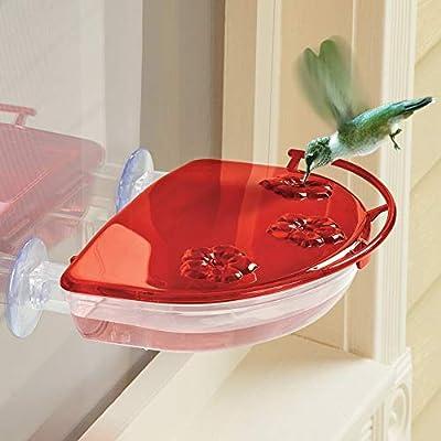 Hummingbird Window View Feeder Jewel Box Suction Cups Bird