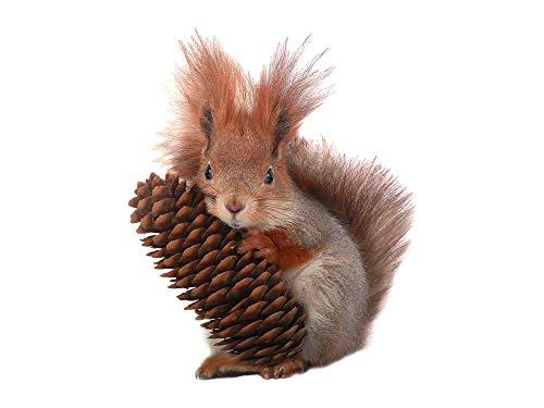 GRAZDesign Wandtattoo Eichhörnchen Eiche, Wandsticker Kinderzimmer Wohnzimmer / 37x30cm