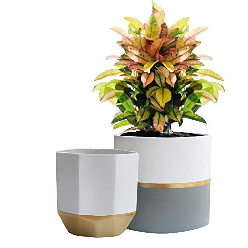 Succulent Planter With Plants Amazon Co Uk