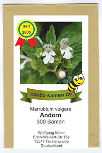 Echter Andorn - Marrubium vulgare - Arzneipflanze des Jahres 2018-300 Samen