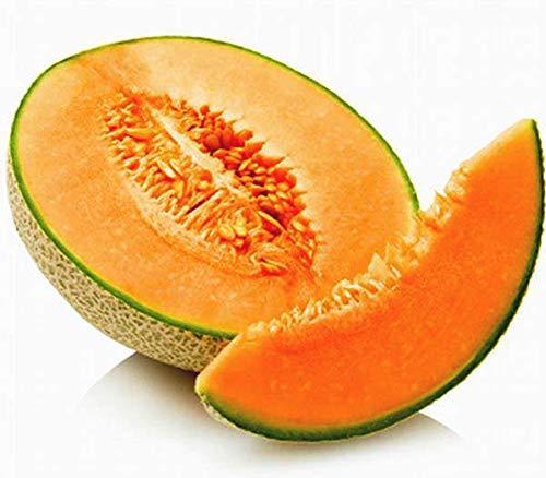 Muskatmelone Hale's Best Jumbo - Melone - 10 Samen