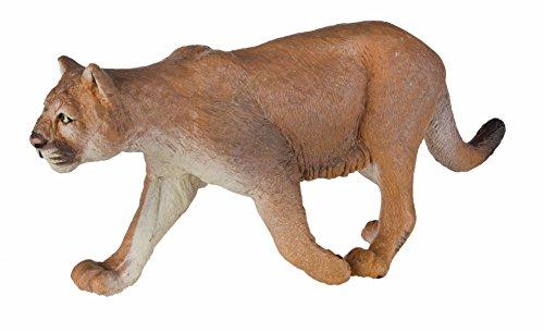 Safari Lion de Montagne S291529