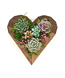 Succulent Hearts -- Self-Love Ideas Valentine's Day