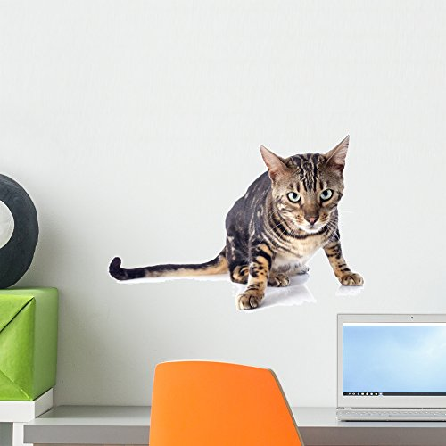 Wallmonkeys Bengal Cat Wall Decal Peel and Stick Graphic WM299780 (18 in W x 12 in H)