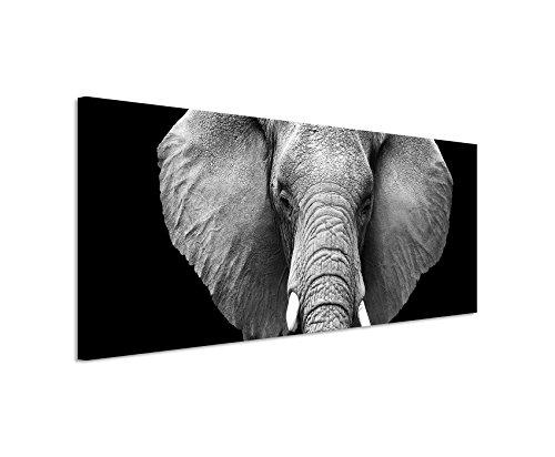 Bild 120x40cm Tierbilder – Großer Elefanten von vorne schwarz weiß