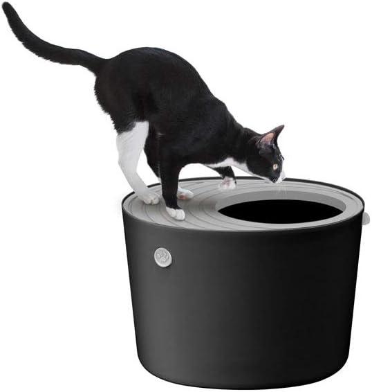 arenero gato sin olores
