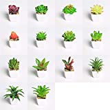 YWSZY Mini Macetas Plantas Artificiales 14 Piezas/Plantas Verdes Plantas Suculentas Set Simulación Mini Bonsai en Maceta Artificial con Pot Colocados Decoración (Color : Set)