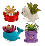 Ocean Creatures Colorful Ceramic Animal Planters, 3.5x5.6x3.4 in Set of 4 Whale, Octopus, Sea Lion, and Crab Succulent Pots