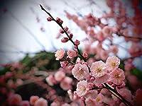 減圧大人500個花花びら木の枝バラアプリコット木製組み立て家の装飾