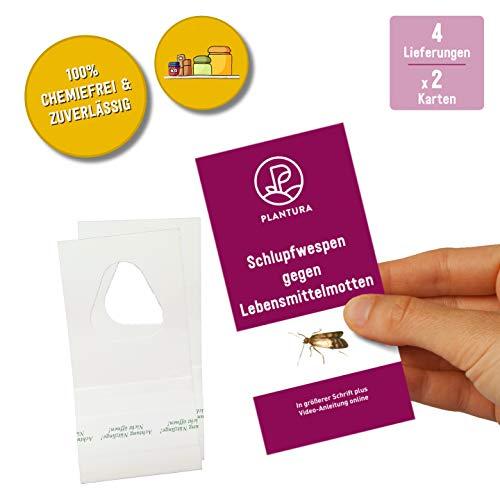 Plantura Schlupfwespen gegen Lebensmittelmotten, Trichogramma, wirksam & nachhaltig Motten bekämpfen, 4 Lieferungen mit jeweils 2 Karten