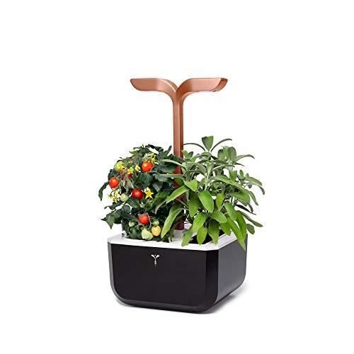 Véritable Huerto de Interior Exky® Smart (Copper) - Fabricado en Francia - Jardín Inteligente Compacto y Autónomo con su tecnología Adapt 'Light - Suministrado con 2 Lingots®