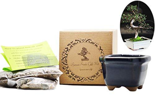 9GreenBox: Bonsai Seed Kit - Chinese Elm
