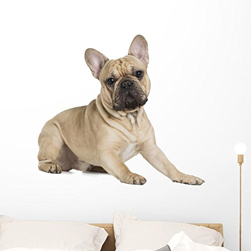 Wallmonkeys French Bulldog Fawn Color Wall Decal Peel and Stick Graphic (36 in W x 32 in H) WM359461