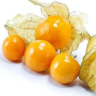 Golden Berries - 24+ Seeds zKE-394