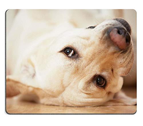 WH-CLA Alfombrillaratón : Labrador Retriever Está Acostado En La Espalda Estudiante Navidad Computadora Durable Goma De Oficina Juego De Regalo Alfombrilla De Ratón 25X30Cm Teclado Dormi