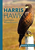 Harris Hawk: Faszination Wüstenbussard