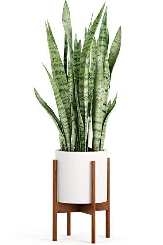 FOX & FERN Mid Century Plant Stand Indoor - Acacia - EXCLUDING 10' Ceramic Pot -...