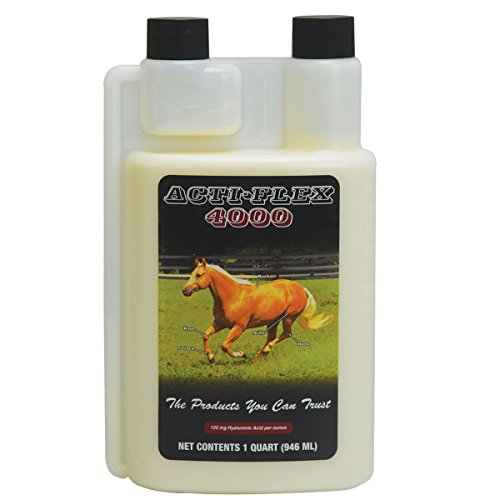 Best Cheap Joint Supplements For Horses
