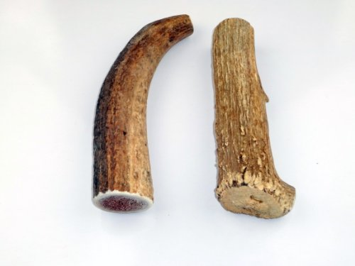 JimHodgesDogTraining Brand - Grade A Premium Quality Elk Antler Dog Chew - Whole and Split Antler Bone Treat - Made in USA - Natural Shed - No Preservatives (Whole, Medium 2-Pack)