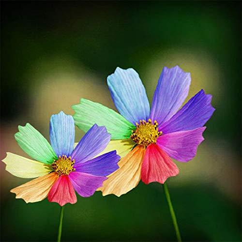 RETS GRAINES: display08 300pcs Rainbow Color Graines Jardin Décor Graines